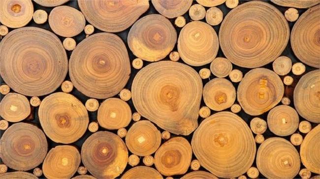 Cây gỗ keo là gì ứng dụng cây gỗ keo