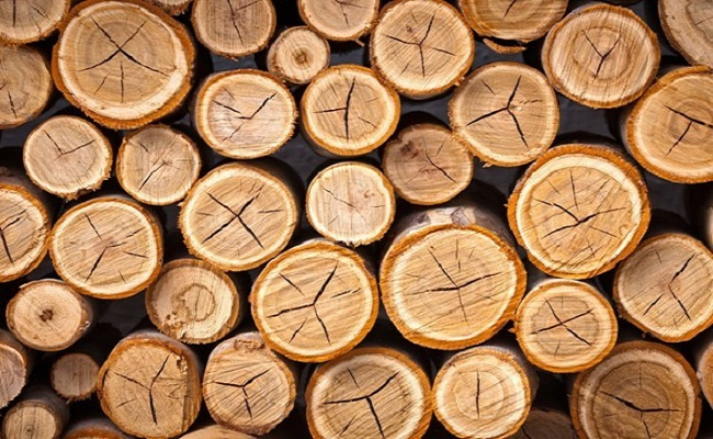 cây gỗ keo là gì
